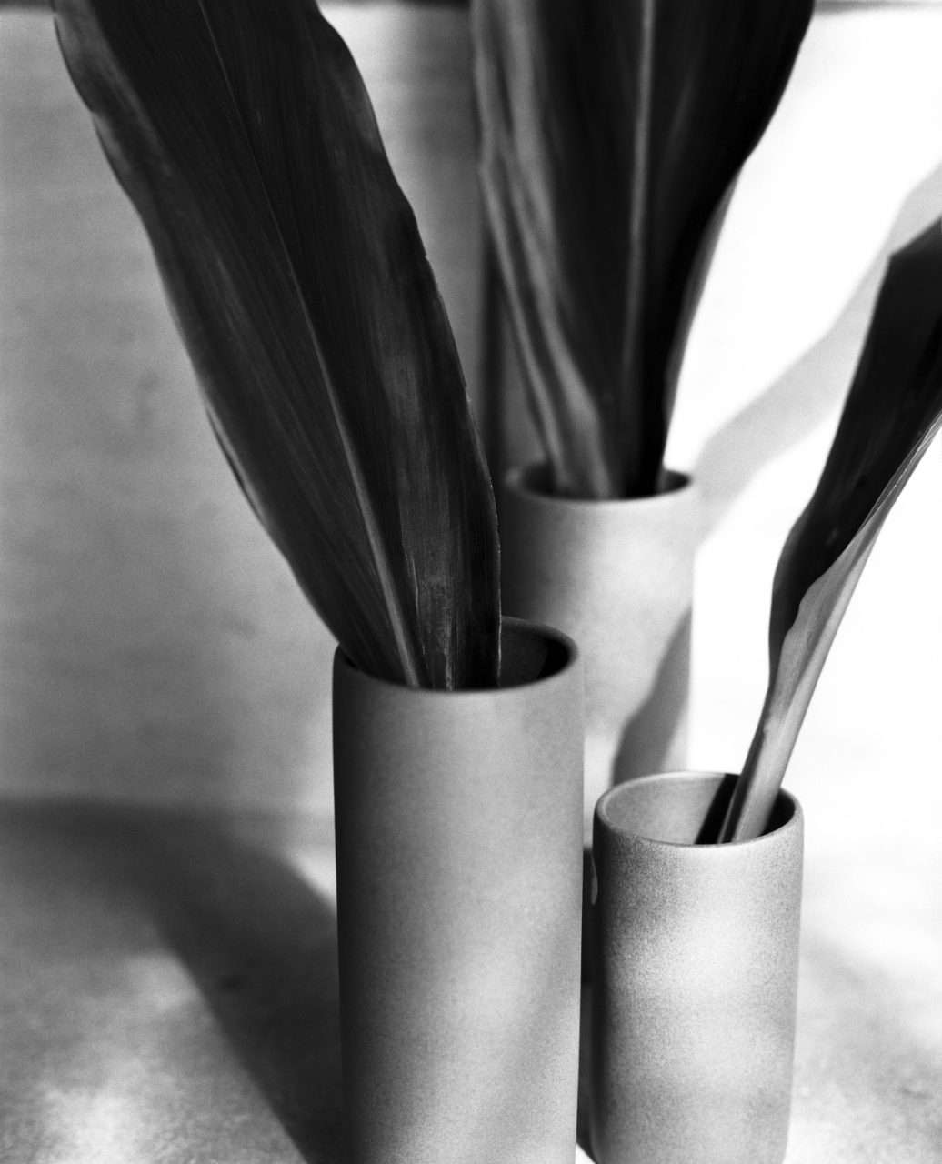 Leaves In Vase B&W