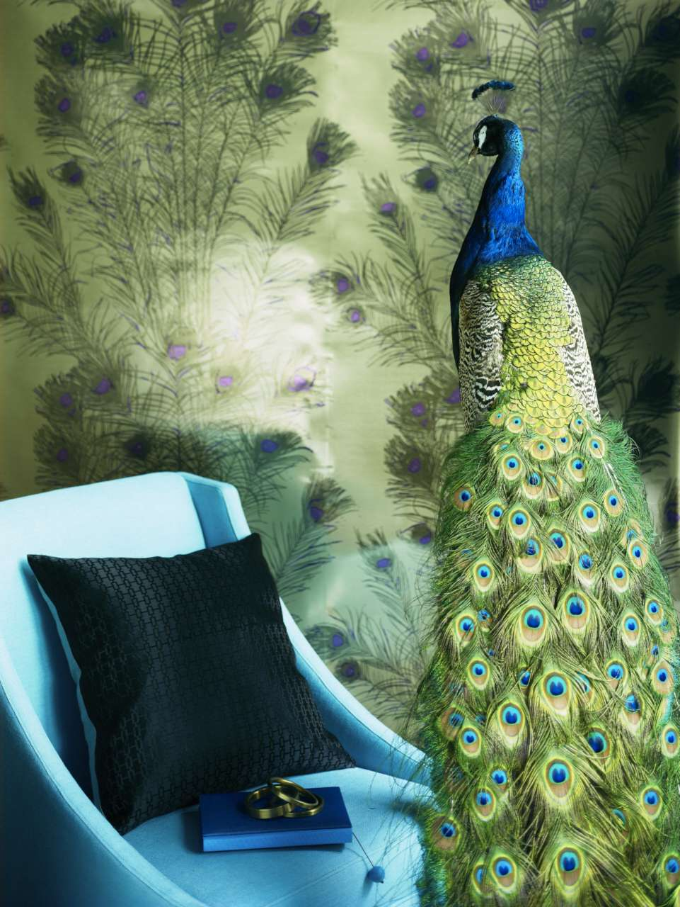 CIN-00022686 Peacock with wallpaper-014